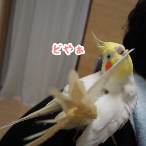 羽繕いするユニ&ニュー