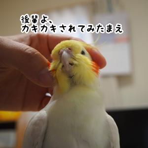 カキカキされるユニ&ニュー