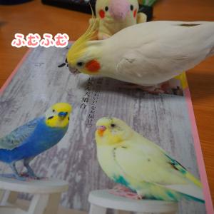ユニと鳥ぐらしvol2