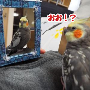 鏡の中のニュー