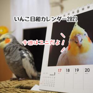 ニューとカレンダーの中のユニ