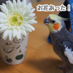 お花とニュー