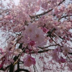 お花見しました(^O^)