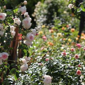 秘密の花園で妖精たちとハートを軽やかにする蝶のワーク