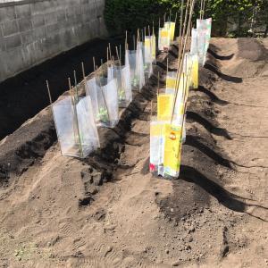 [家庭菜園2020]種撒き&苗植え