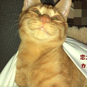 茶とラ猫の恋太郎と私 カンガルーかよ!編