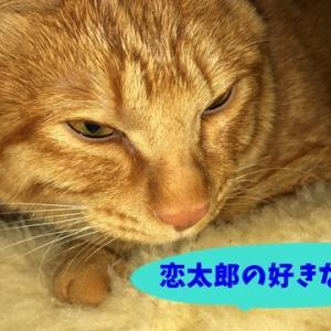 ねこのきもち 茶トラ猫の恋太郎と私