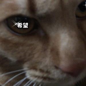 仮想現実編 ねこのきもち 茶トラ猫の恋太郎と私
