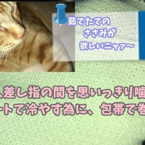 人間かよ!No2編 ねこのきもち 茶トラ猫の恋太郎と私