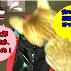 心配無用編 ねこのきもち 茶トラ猫の恋太郎と私