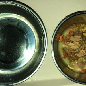 カルカン新チキン味が美味しい編 ねこのきもち 茶トラ猫の恋太郎と私