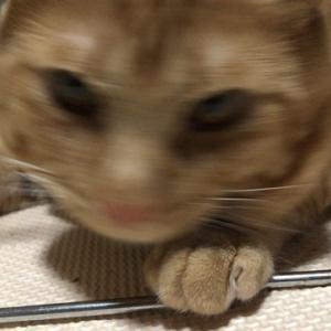 政治家は一度やったらやめられない程儲かる編 ねこのきもち 茶トラ猫の恋太郎と私