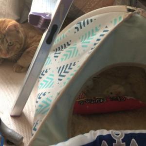 ボートクッション編 ねこのきもち 茶トラ猫の恋太郎と私