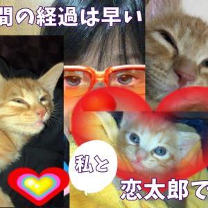 茶トラ猫の恋太郎と私 フロントライン内容編