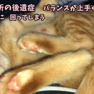 茶トラ猫の恋太郎と私 神経が麻痺してる編