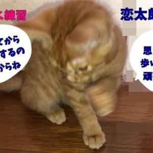 茶トラ猫の恋太郎と私 恋太郎の不安編