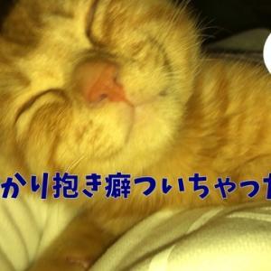 茶トラ猫の恋太郎と私 抱き癖編