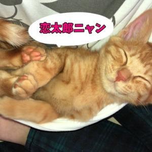 茶トラ猫の恋太郎と私 離れない編