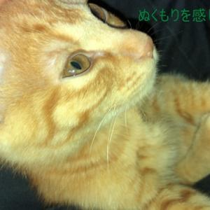 茶トラ猫の恋太郎と私 依存症編