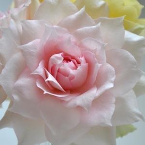 秋のバラ|シャリマー フラワーデコレーター永島|2020/9/24 強風と薔薇の花 切り花 香り 画像|roselog