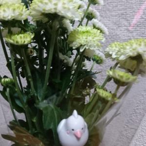 マリンちゃんへのお花