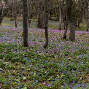 青と紫の競演