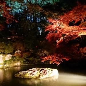 【京都 青蓮院】青蓮院門跡、龍心池の紅葉です