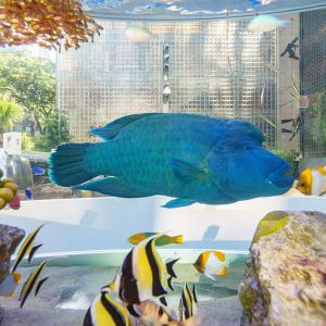 銀座の夏の風物詩がGinza Sony Parkに登場『Sony Aquarium 2019』開催