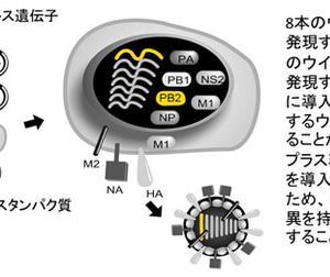 新型コロナウイルスの構造 2