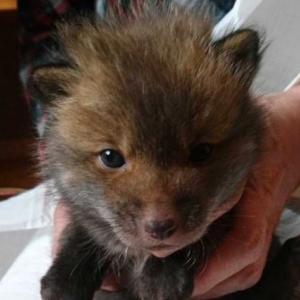 北海道で保護された意外な動物