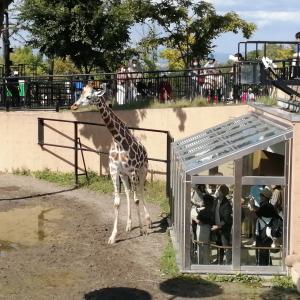 定番の旭山動物園