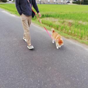 あさんぽと夕方のお散歩とあれこれ♪♪