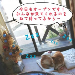 今日もオープン〜(^∀^)♪明日ウクレレはお休み〜♬*゜