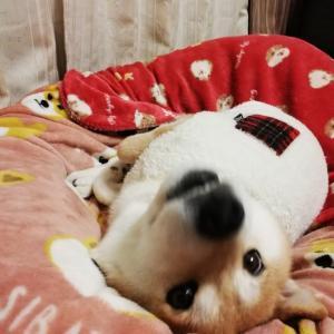 今夜のくるみとゴスペル(o´・ω-)bヨイ!!