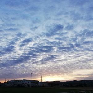 今朝のあさんぽとうろこ雲