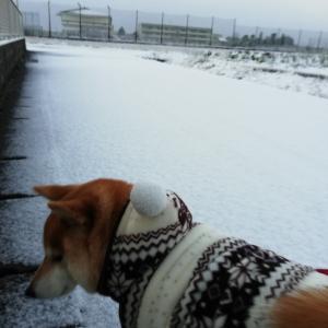 雨が雪に❤