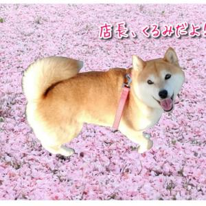 """""""桜の絨毯に集まれ!"""""""