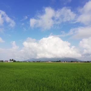 お散歩とウマウマと大阪弁