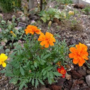 Hapicco花壇と好きな賛美♬︎♡