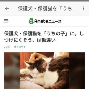 """""""保護犬・保護猫は不安?"""""""