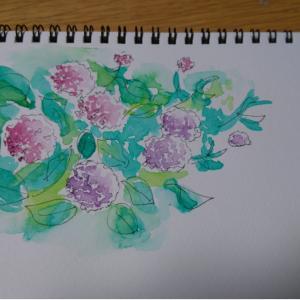 紫陽花のスケッチ♪