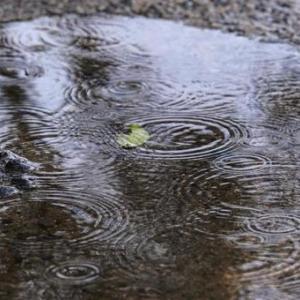 梅雨の養生