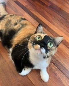 今日の猫たちとワクチン2回目