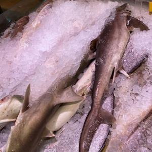 ドバイの魚を食べたい⑤