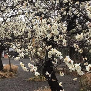 桜もちを買って、隅田川七福神めぐり②(2020年2月16日)