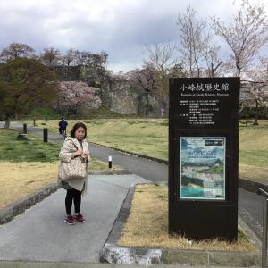 コロナでも福島。満開の桜の下、城を仰ぐ 4 - 白河小峰城跡・小峰城歴史館(2021年4月9日/1日め)