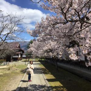 コロナでも福島。満開の桜の下、城を仰ぐ 12 - 会津若松・日新館(大学から水練水馬池へ)(2021年4月10日/2日め)