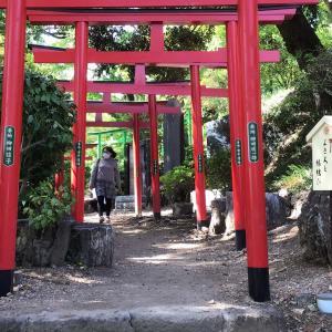 コロナでも足利。織姫神社と足利学校を訪ねて 10 - 藤だなと春もみじを見上げて(2021年4月30日)