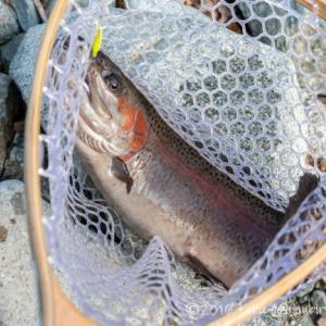 うらたんざわ渓流釣り場で大物トラウトを狙え!