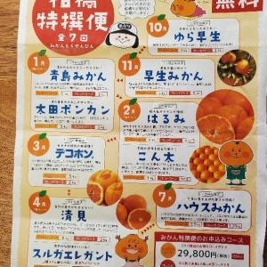 柑橘特撰便